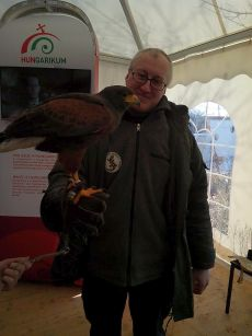treehugger dan and harris hawk