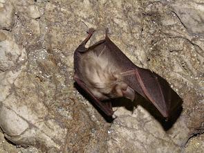 bat in kecske-lyuk